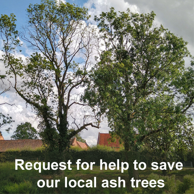 Request for help to save our local ash trees
