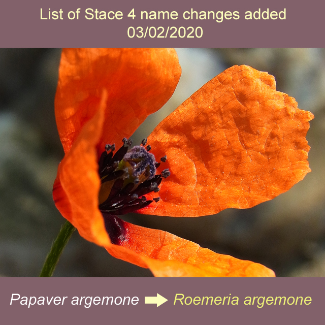list of Stace 4 name changes added