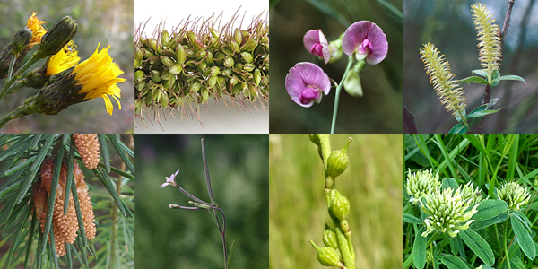 Various plant images